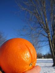 Winter Orange