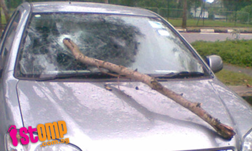 Tree branch falls and pierces car windscreen