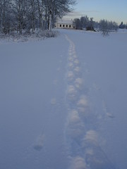 Snow shoe tracks Photo