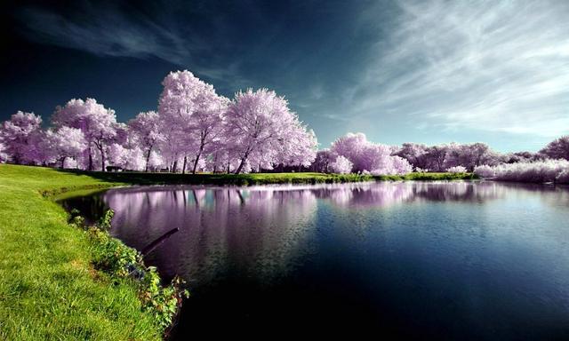 자연을 소재로 한 사진들