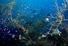 Black corals... (Lea's UW Photography) Tags: underwater fisheye maldives fins malediven blackcoral tokina1017mm unterwasserfoto leamoser schwarzekorallen