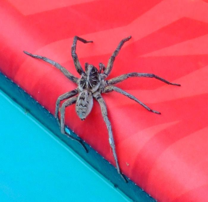big spider 02