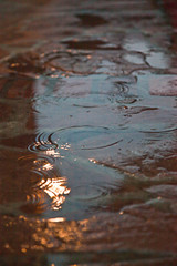 Project 365 #17: Puddles