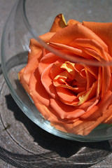 forbidden rose (avalilly) Tags: light orange flower glass rose canon globe refraction 1855 rebelxsi avalilly lauracrowell