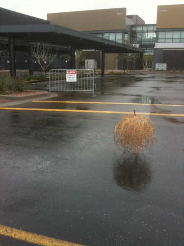 Tumbleweed in a rainstorm