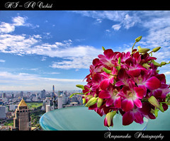 HI SO Orchid /  (AmpamukA) Tags: city sky cloud plant orchid flower tower bangkok yok thai hi decorate bai        ampamuka