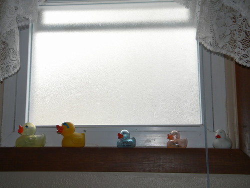 Window Ducks