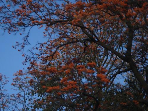Arboles floridos enero 2010