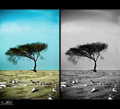 (Shrf AlMalki..) Tags: tree nature dead death desert drought bone lonely  agreed     shrf  almalki