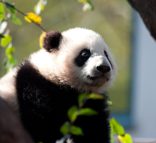 Yun Zi pictures from yesterday morning