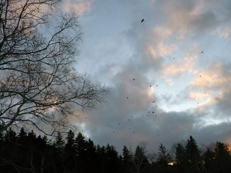 clouds and crows