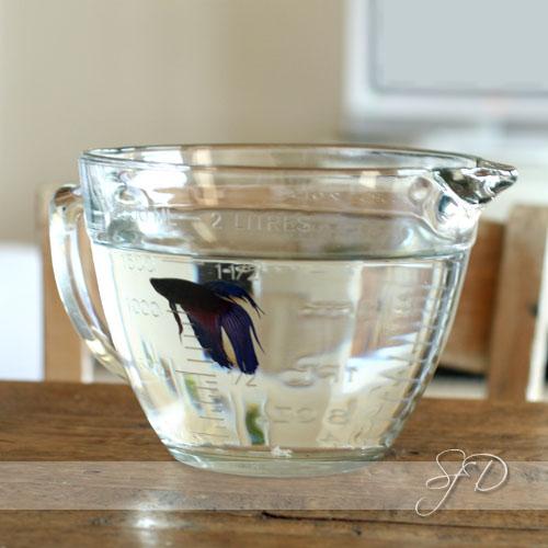 beta in a measuring bowl