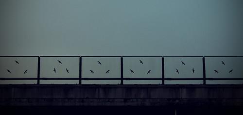 ornitologi da autostrada 1