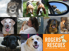 Rogers_Rescues_Collage