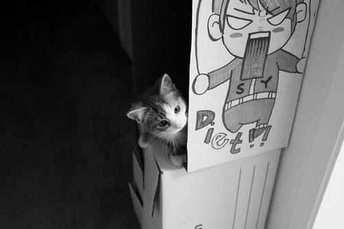 cat-2010-02-04-31
