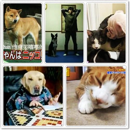「好笑影片」會做體操的狗狗,貓揍狗,喜歡按摩的貓,會笑的狗兒,會打電話的拉拉,祝新年愉快,情人節快樂,20100214