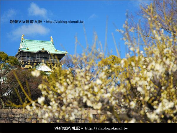 【via關西冬遊記】大阪城天守閣!冬季限定:梅園梅花盛開8