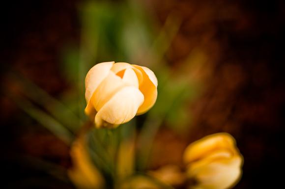 2010-02-18 Garden_3