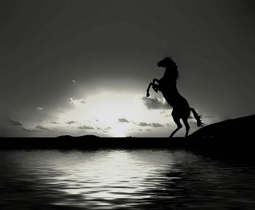 フリー画像| 動物写真| 哺乳類| 馬/ウマ| シルエット| 湖の風景| モノクロ写真|     フリー素材|