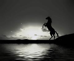 [フリー画像] [動物写真] [哺乳類] [馬/ウマ] [シルエット] [湖の風景] [モノクロ写真]     [フリー素材]