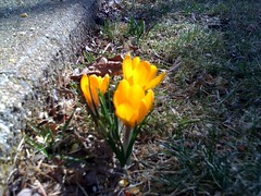 First Flower March 8, 2010