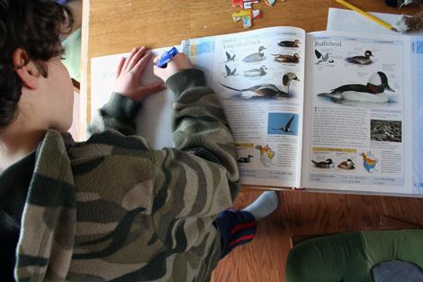 bird<br/>studies