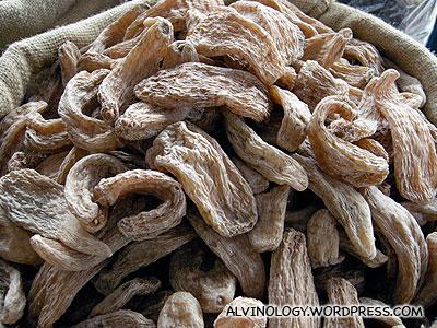 Cordyceps (I think)