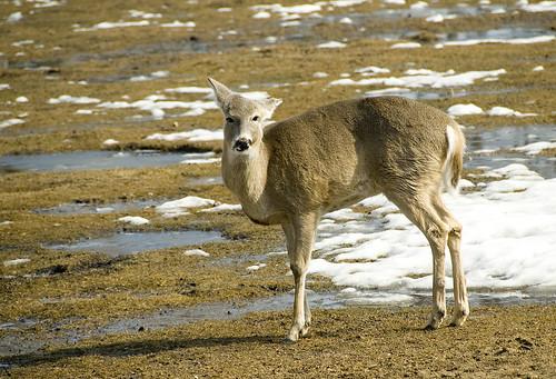 Winnipeg Zoo March 2010