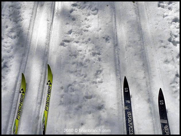 P1080938_skis