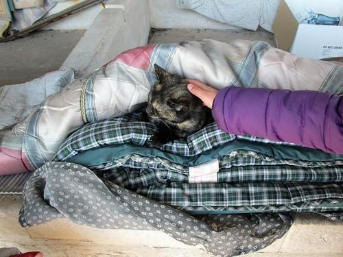 gato do lavadouro