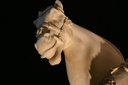 Photo365 Day 66 - Horse Head