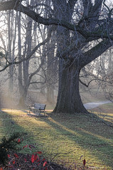Highland Park Draped in Fog (maryshelsby) Tags: oneaday fog bench rochester highlandpark project365 shelsby