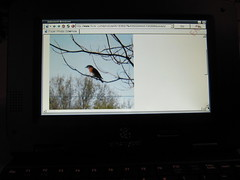 A bluebird on my Cherrypal Africa screen from my flickr account