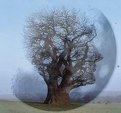 El árbol, ese tranquilo testigo vanidoso de principio de otoño... (conejo721*) Tags: