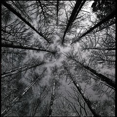 converge ! (HASSELBLAD SWC) (potopoto53age) Tags: trees blackandwhite bw plant tree film monochrome japan zeiss forest blackwhite kodak f45 carl epson cypress kodakbw400cn yamanashi blackdiamond converge swc 38mm bw400cn biogon kobuchizawa epsongt9700f hasselbladswc superaplus aplusphoto flickraward hasselbladsuperwidec blackandwhiteonly carlzeissbiogon38mmf45 gt9700f