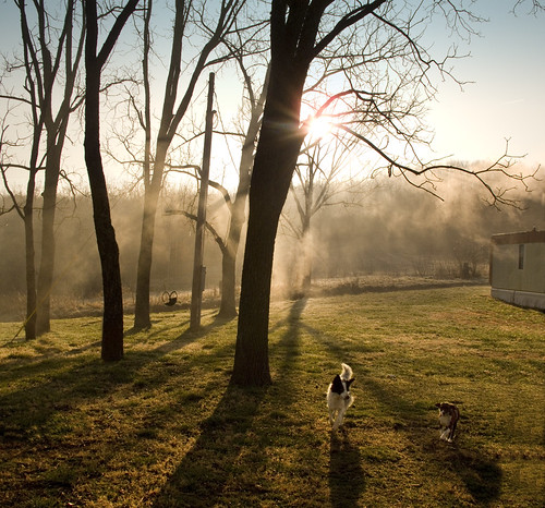 Photo of dogs walking early in the morning