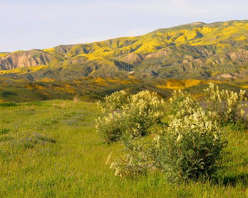 Muy Caliente Range