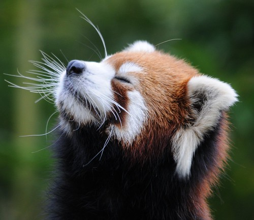 Now Meditating...