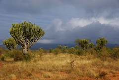 africa (Vecaks.narod.ru) Tags: africa kenya east tsavo