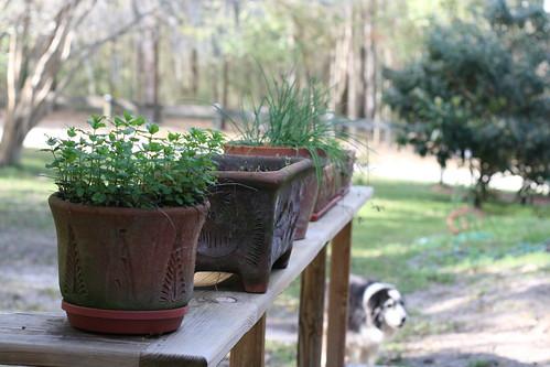 Dad's herb garden