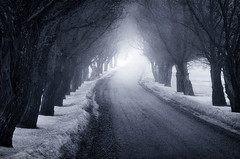 The Way (Latyrx) Tags: road trees winter light shadow mist snow fog photoshop suomi finland dark way landscape photography photo spring nikon mood moody graphic snowy path stock perspective atmosphere mysterious mystical finnish nikkor sell 70300mm depth thick pathway vr mikko 2010 resize latyrx d90 nikond90 anothercliche mikkolagerstedt