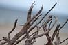 (Per Erik Sviland) Tags: ocean wood blue sea beach sand nikon bokeh erik per d300 pererik sviland sqbbe pereriksviland