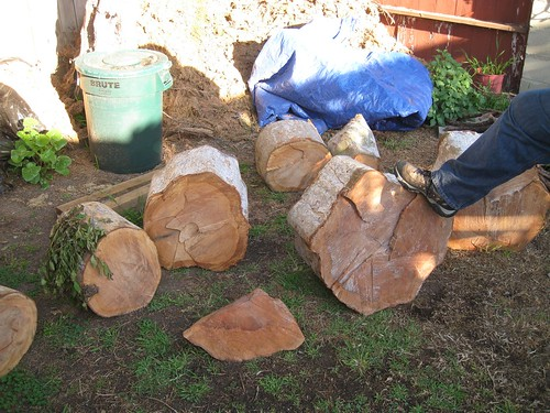 Tragedies 13 Chinese Elm Logs And The Forces Of Nature By Gary