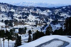 2010 -slushy hamlet- (tepe777) Tags: snow public japan 50mm niigata  hamlet nagaoka   yamakoshi  d700