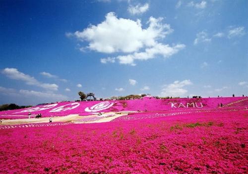芝桜の名所 花夢の里 ロクタン23
