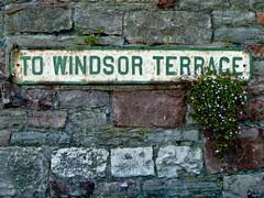 Wallflower (gothick_matt) Tags: street old uk flowers texture sign stone wall bristol rust unitedkingdom terrace stonework streetsign bricks places wallflower cliftonvillage towindsorterrace