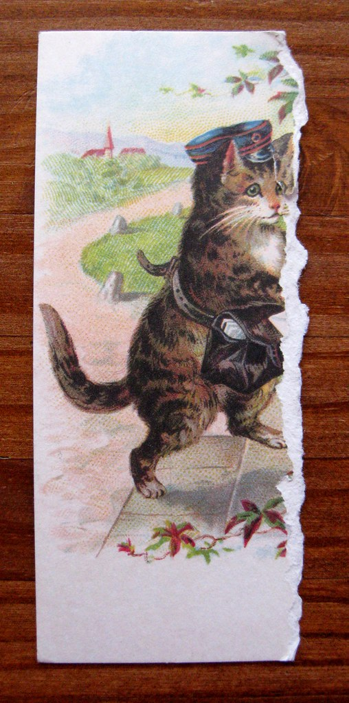 Ripped kitty postcard