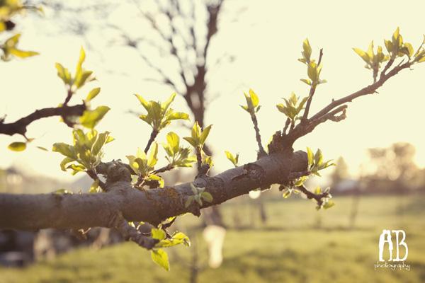 spring2b