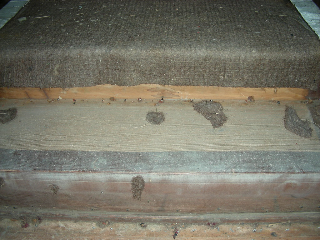 Stair treads, under the carpet