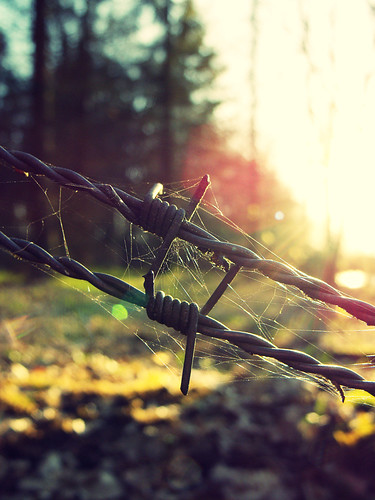 Stacheldraht mit Spinnennetz